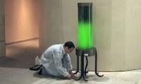 Зелёные водоросли днём поглощают углекислый газ, а ночью светятся. Всё ли так просто?