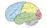 Вмонтированные в мозг электроды позволили «увидеть» воспоминания