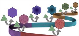 ДНК научились использовать для кодирования формы наночастиц золота