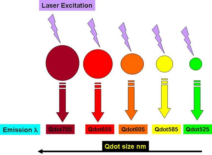 Зависимость длины излучаемой волны от размеров квантовой точки при облучении монохроматическим источником света (изображение: icms.qmul.ac.uk).
