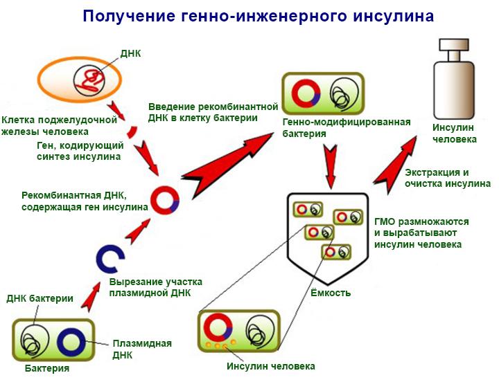 Схема получения инсулина методами генной инженерии (по материалам: discoveryandinnovation.com).