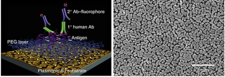 Схема работы плазмонного микрочипа и электронная микрофотография поверхности его пластины с наночастицами золота (фото: nature.com).