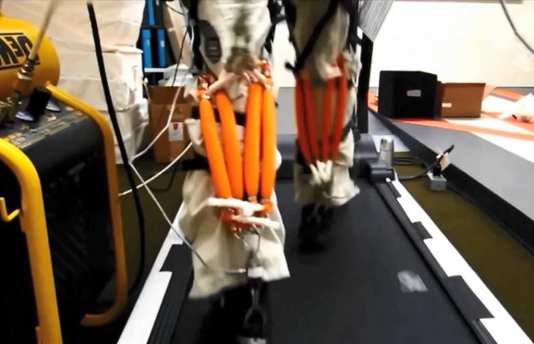 Испытания гибких актуаторов, выступающих в роли искусственных мышц (фото: harvard.edu).