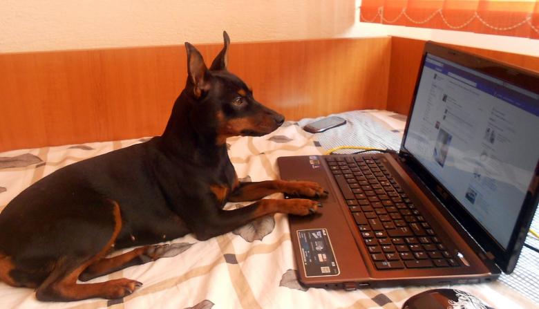 """В """"Фейсбуке"""" даже у домашних животных бывают свои аккаунты (изображение: galleryhip.com)."""