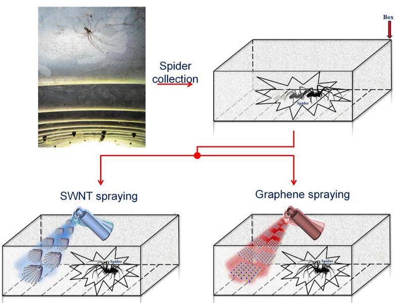 Методика эксперимента (изображение: Emiliano  Lepore et al.).