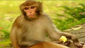 Роскосмос планирует отправить на Марс обезьян.