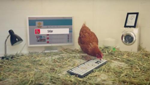 Твиты для сети австралийских ресторанов Chicken Treat пишет… цыпленок по имени Бетти.
