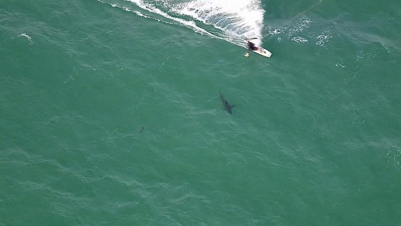 Дроны станут частью австралийской системы береговой защиты от акул