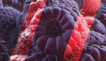 Распознать «синтетику»: тест, который мы провалили