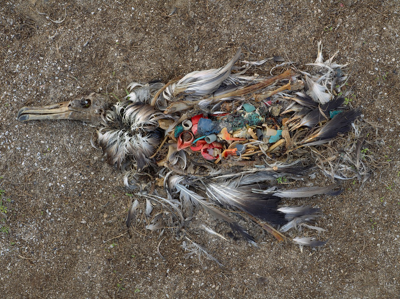 До сих пор от пластика страдали все, кроме людей. Теперь наша очередь.