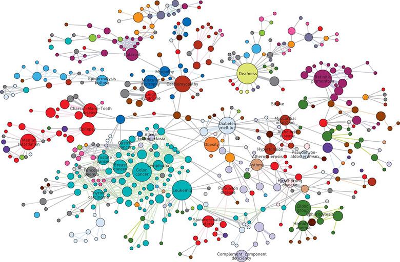 Пример того, как выглядит граф Источник: Goh K et al. «The Human Disease Network», PNAS 2007; 104: 8685-8690