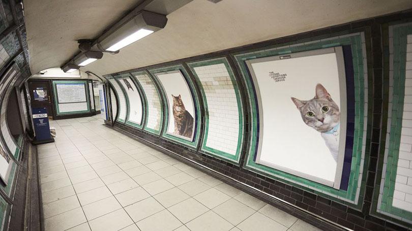 Британские волонтёры заменили рекламу в метро на фотографии котов