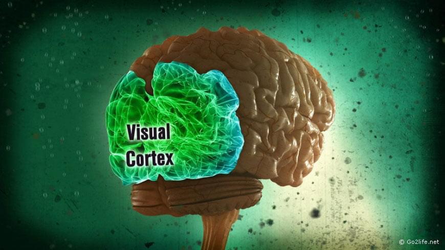 Зрительная кора головного мозга – в авто-пилоте ее роль играют микросхемы Mobileye EyeQ3