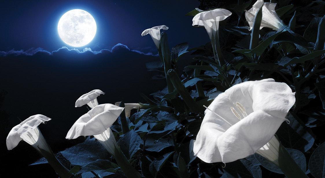 Лунные ростки: в контейнере лунного ровера Chang'e 4 взошли семена хлопчатника