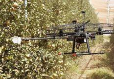 Дроны будут собирать урожай фруктов и доставлять продукты