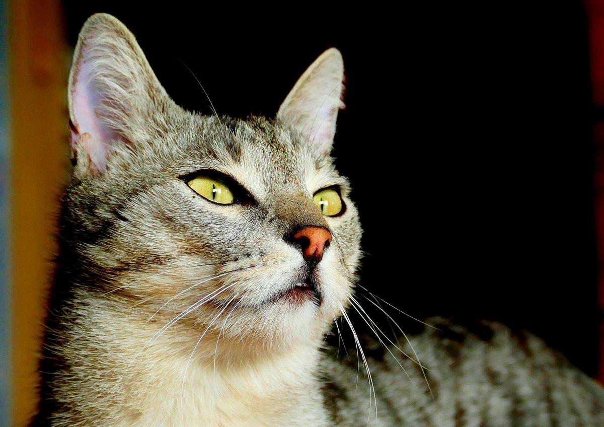 Генерация... котов