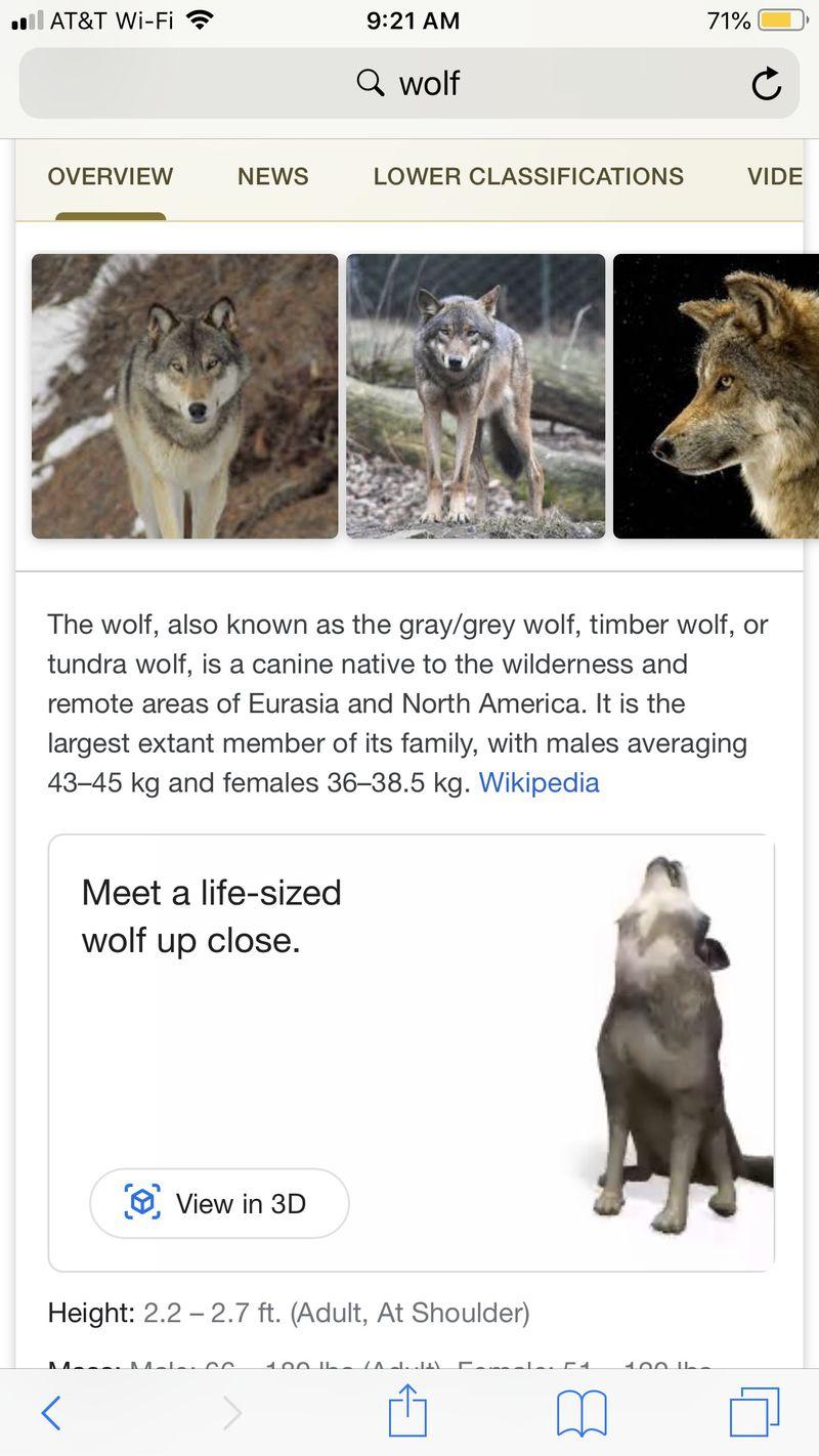 В Google Search интегрирован просмотр результатов поиска в 3D
