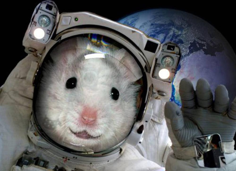 Собаки, обезьяны, плодовые мушки и другие животные-космонавты