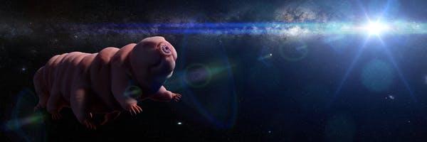 Тихоходки: на Луну попали практически не убиваемые существа