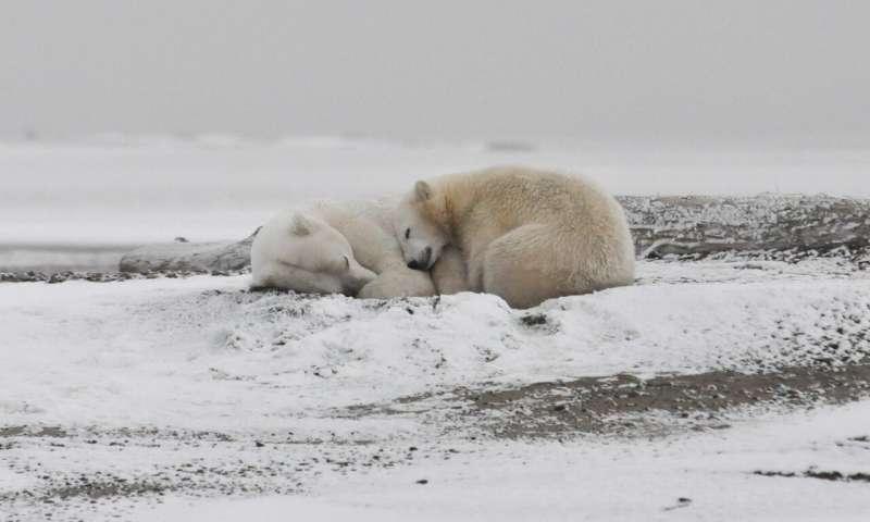 Северный Ледовитый океан может лишиться сентябрьского ледяного покрова