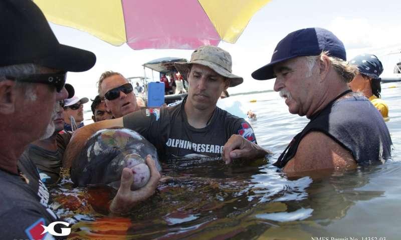 Устойчивость к антибиотикам растет не только у людей, но и у дельфинов