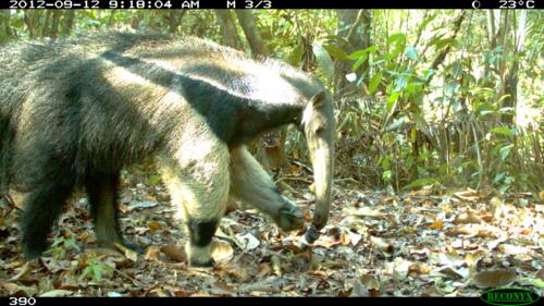 Google изучает популяции животных с помощью гигантской сети камер