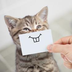 У кошек есть богатая мимика, но не каждый человек может ее прочитать