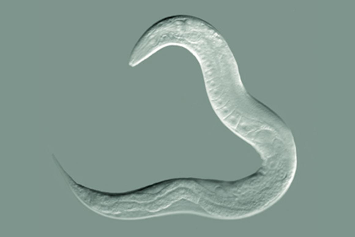 500 % для червя – эквивалентно 400 лет для человека