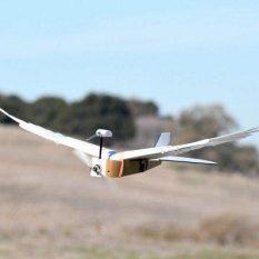 Создан дрон с голубиными перьями