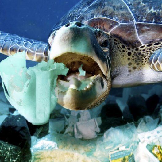 Ученые предлагают использовать пластик, который разлагает морская вода