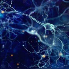 Ученые впервые записали процесс очищения мозга от мертвых клеток