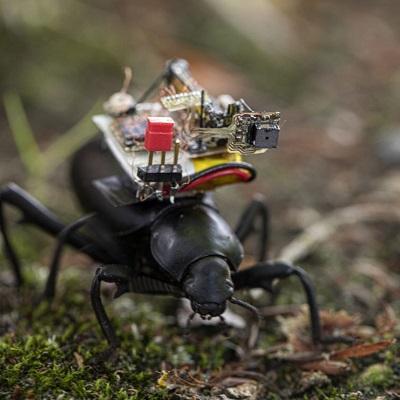 Исследователи превратили жуков в фотографов, чтобы посмотреть на мир глазами насекомых
